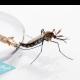 remedios-naturales-para-la-malaria
