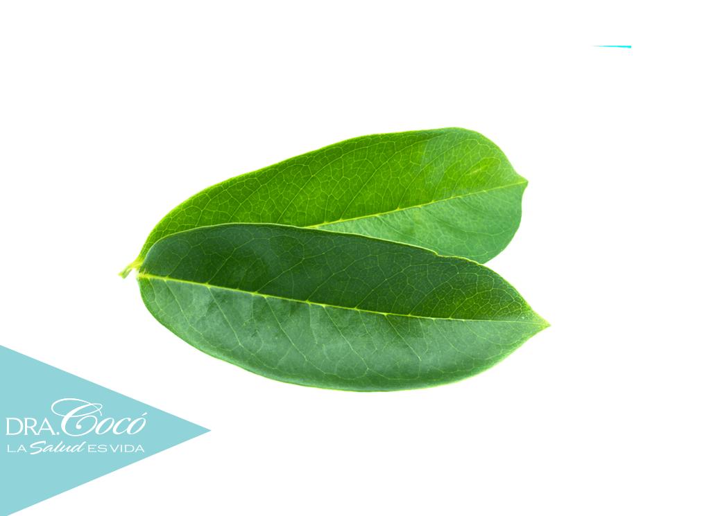 hojas-de-guanábana-para-cáncer