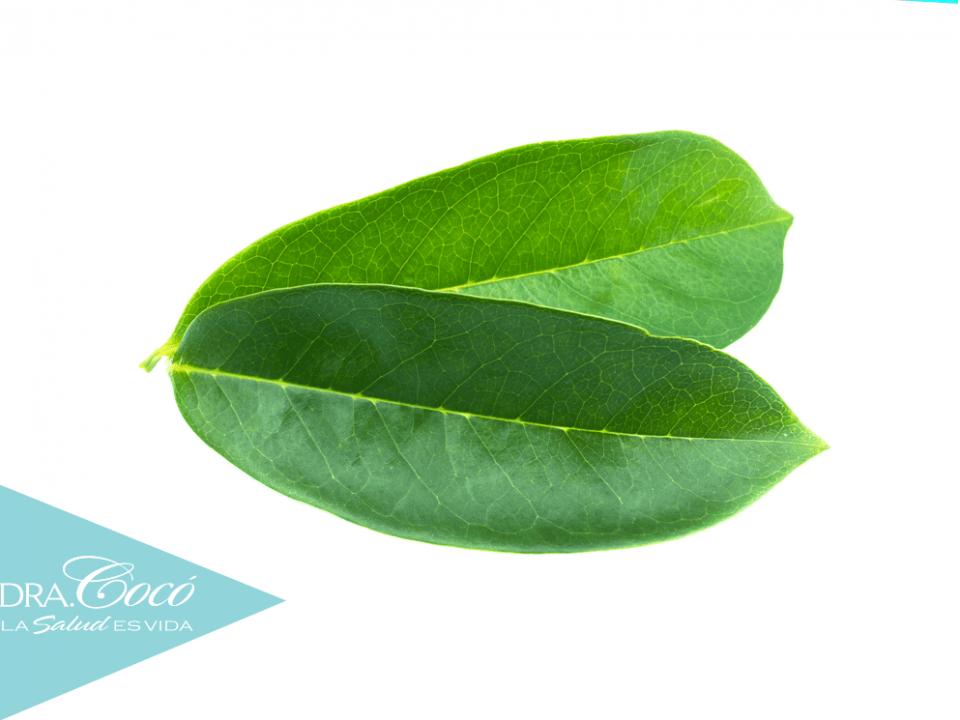 hojas-de-guanábana-para-combatir-el-cáncer