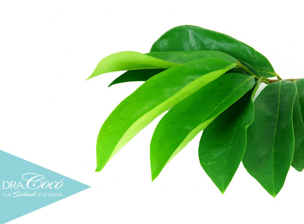hojas-de-guanábana-cáncer