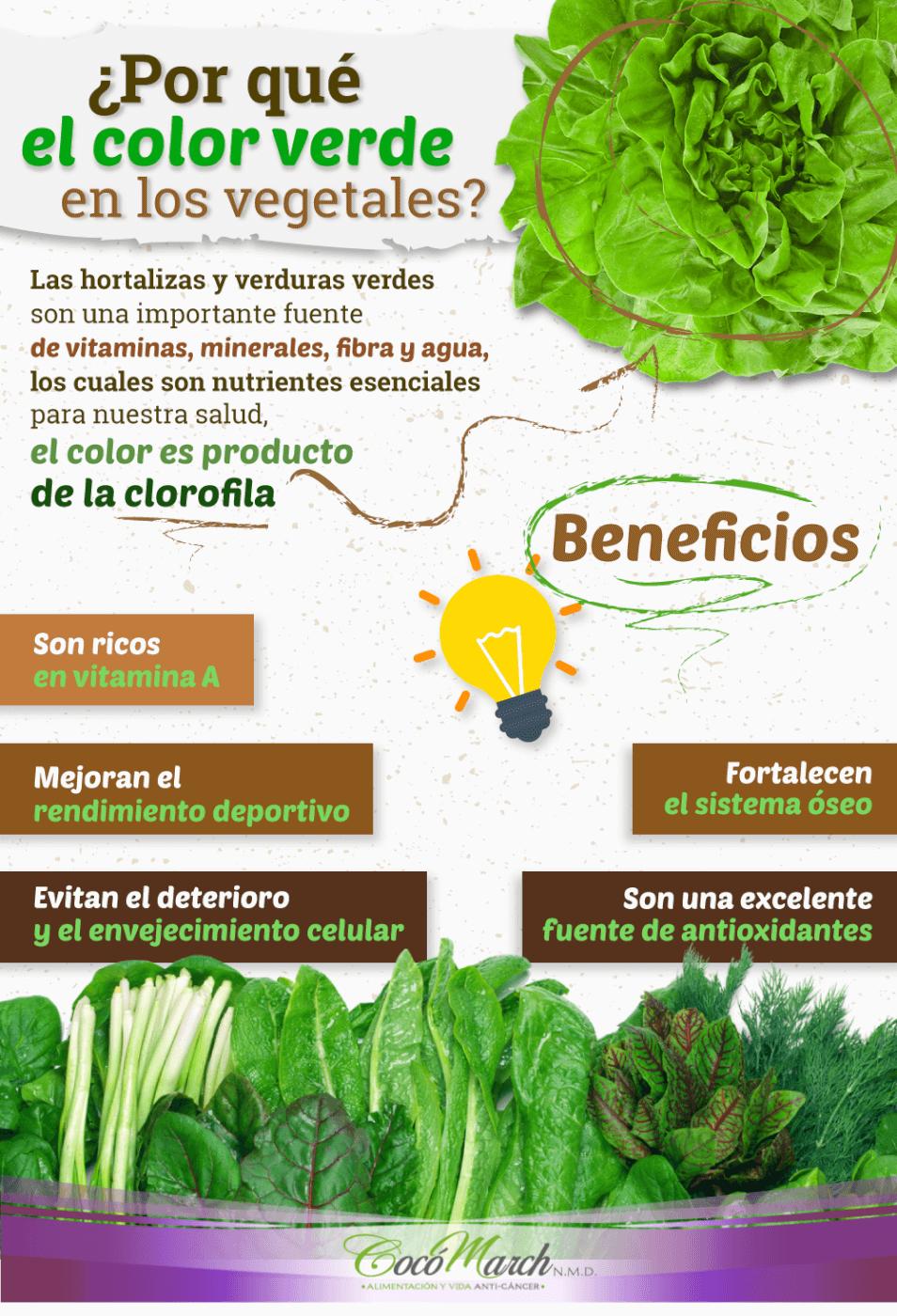 por-qué-el-color-verde-en-los-vegetales