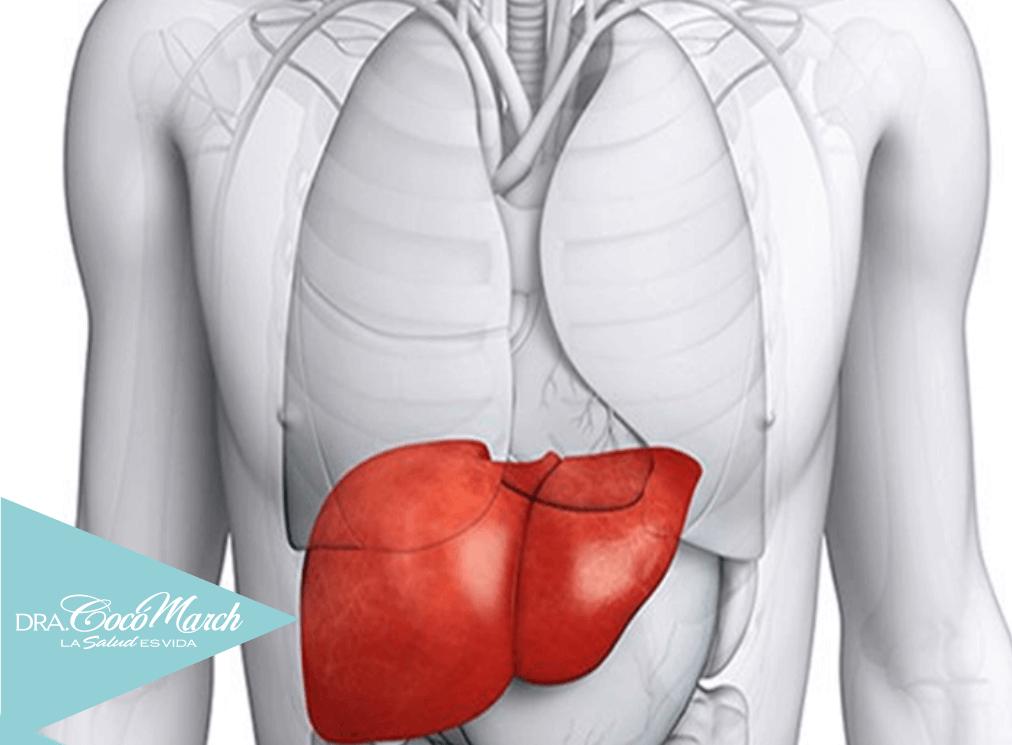 funciones-del-hígado