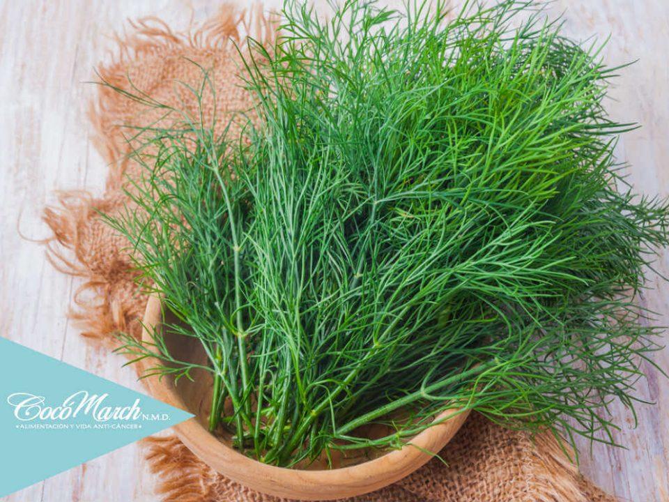 hojas-y-semillas-de-eneldo-podrían-controlar-la-diabetes