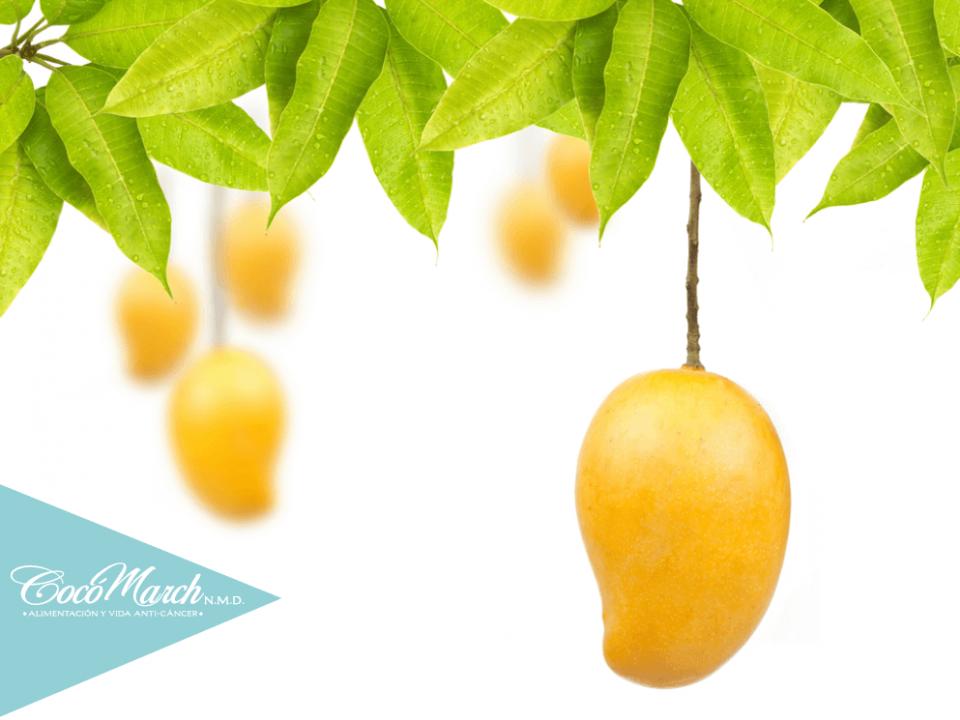 hojas-de-mango-para-la-diabetes