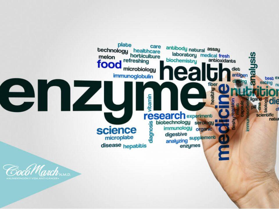 reducir-inflamación-con-enzimas-proteolíticas
