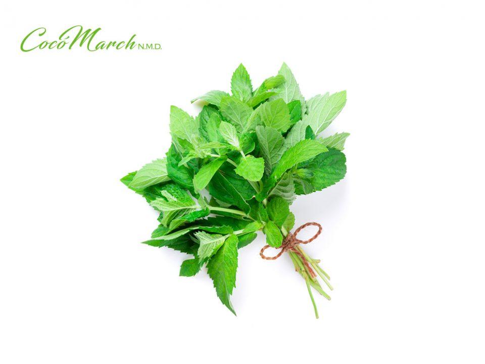 plantas-medicinales-para-tu-salud