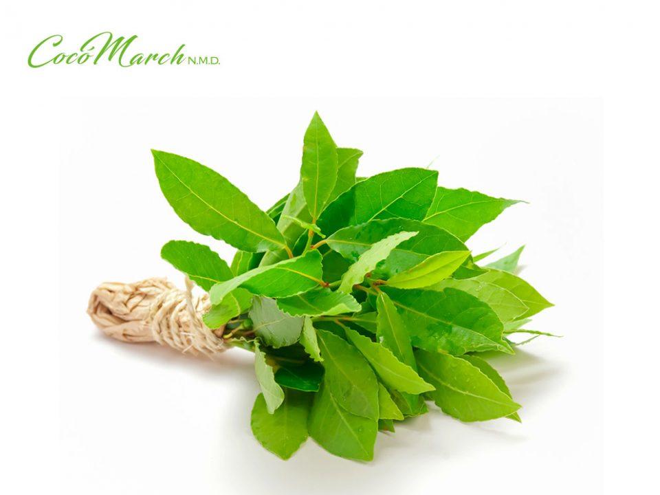 beneficios-de-las-hojas-de-laurel