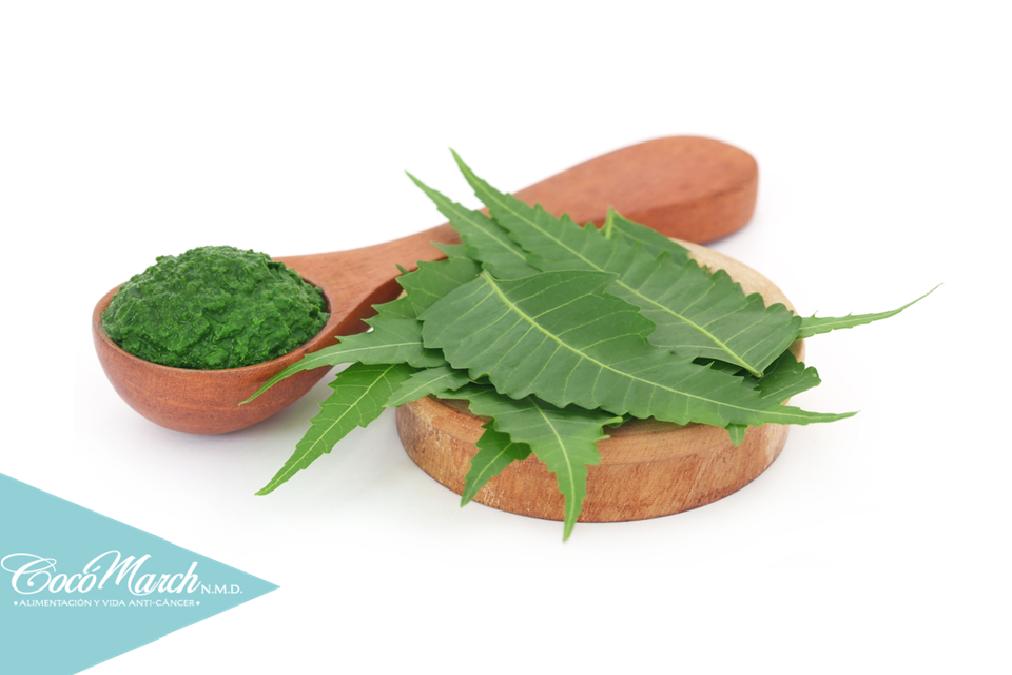 propiedades de la planta neem