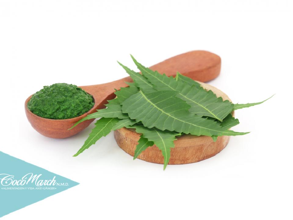 para-qué-sirven-las-hojas-de-neem
