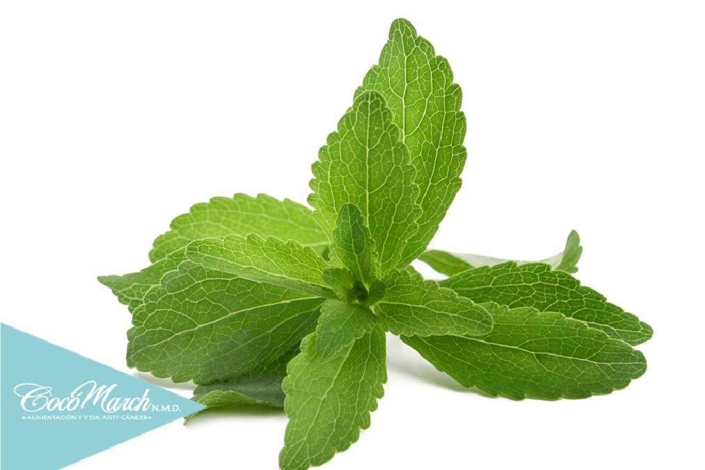 cómo-cultivar-tu-propia-planta-de-stevia