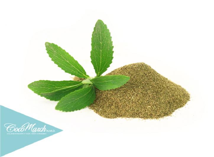 cultivar-stevia