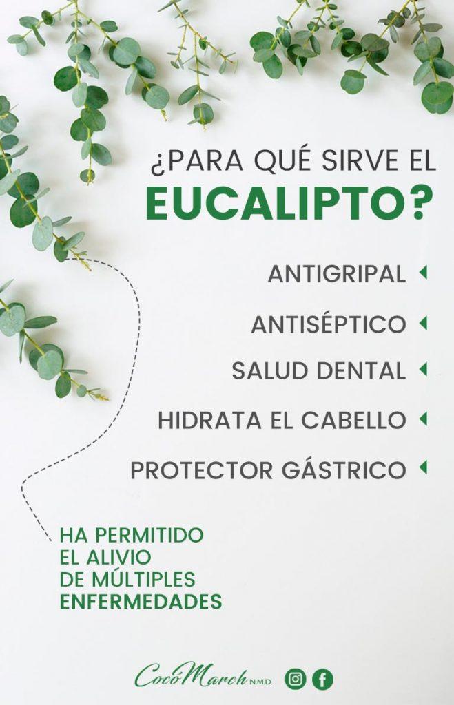 para-qué-sirve-el-eucalipto