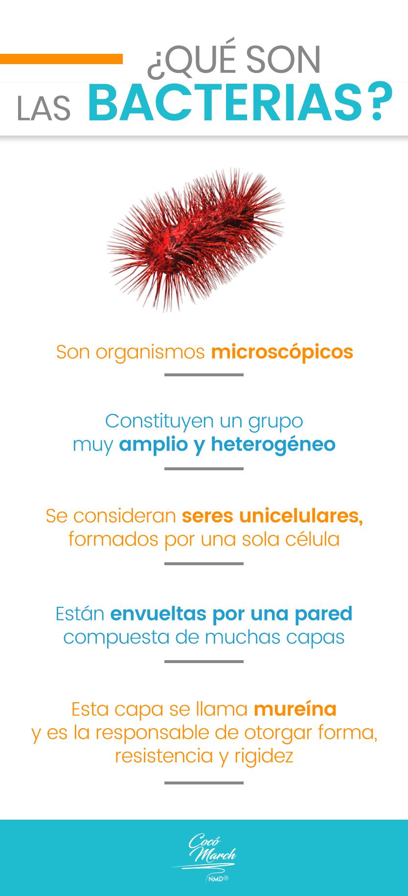 bacterias-que-son
