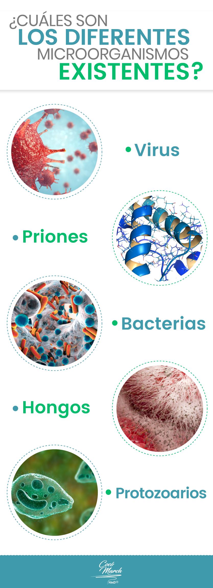 diferentes-microorganismos