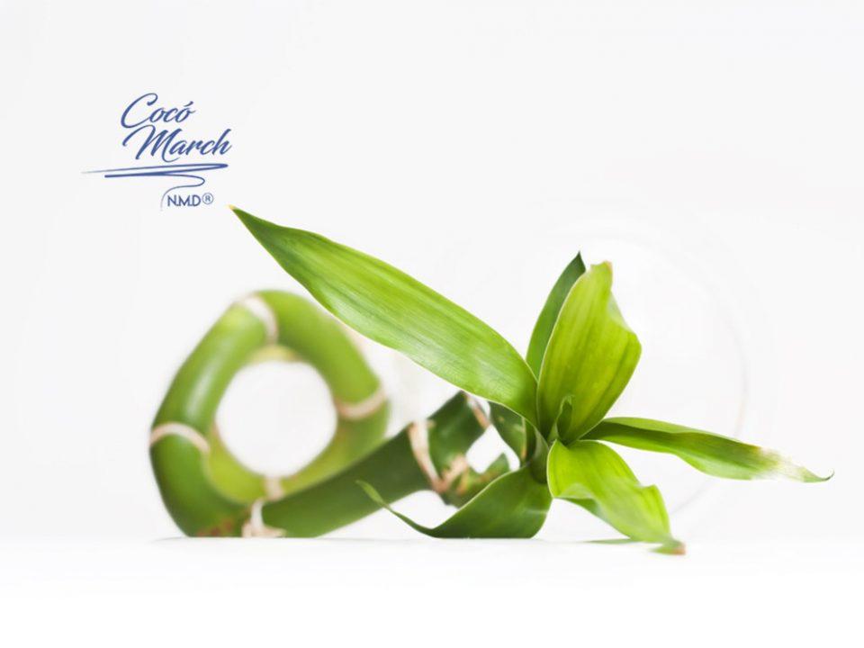 beneficios-de-la-infusion-de-hoja-de-bambu