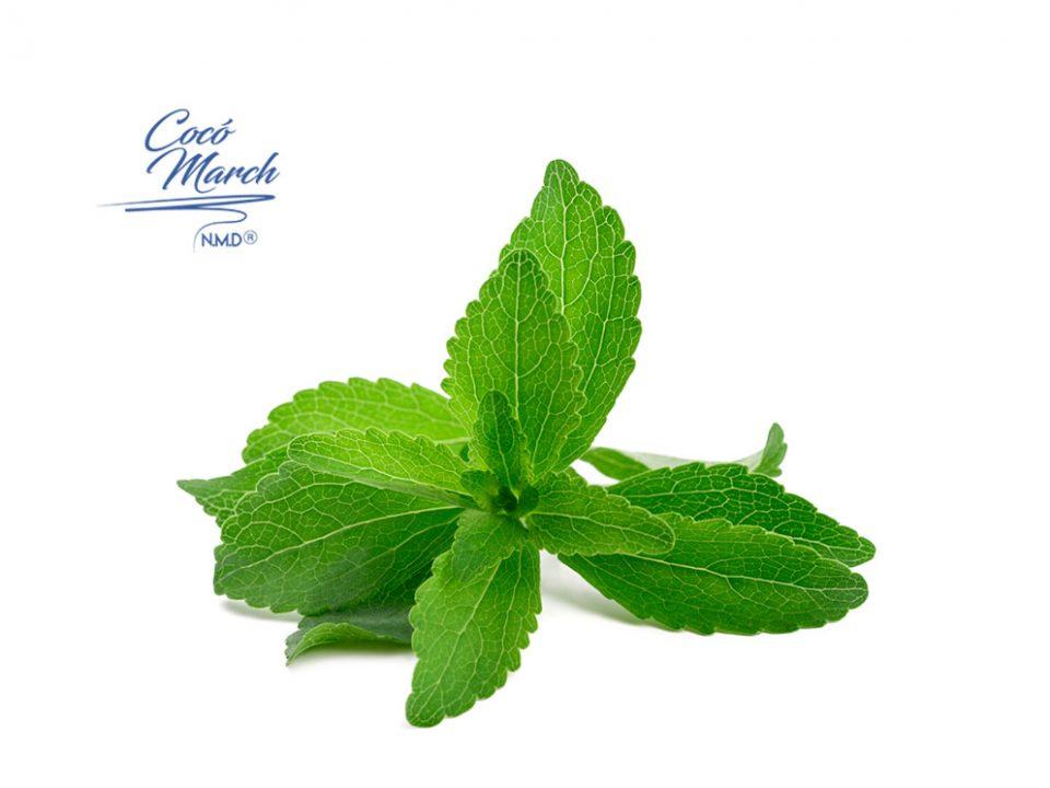 la-stevia-puede-curar-la-enfermedad-de-lyme
