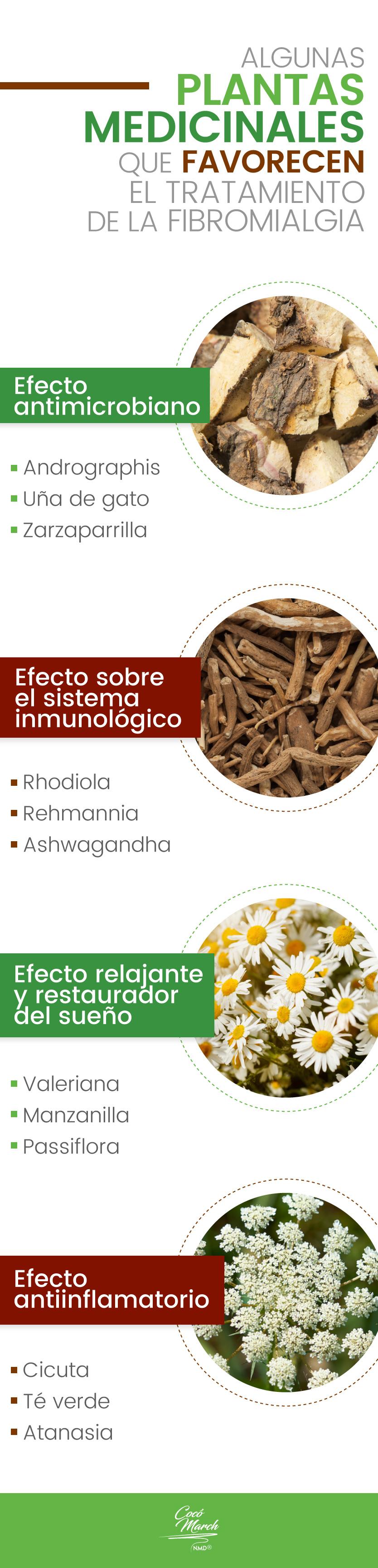 fibromialgia-plantas-medicinales