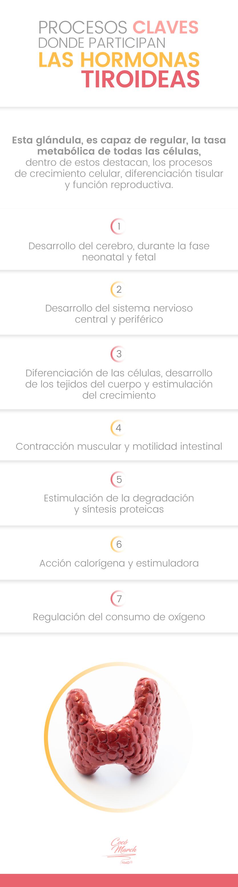 hipotiroidismo-procesos-claves