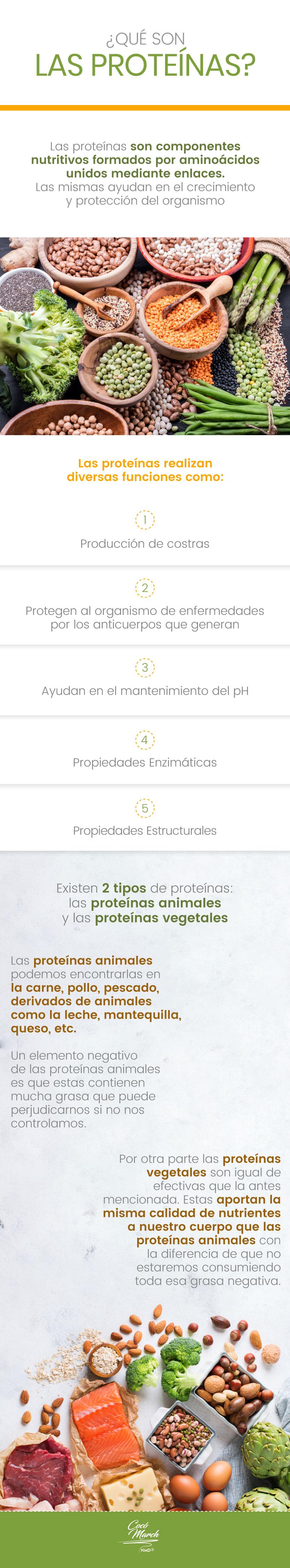 proteinas-que-son