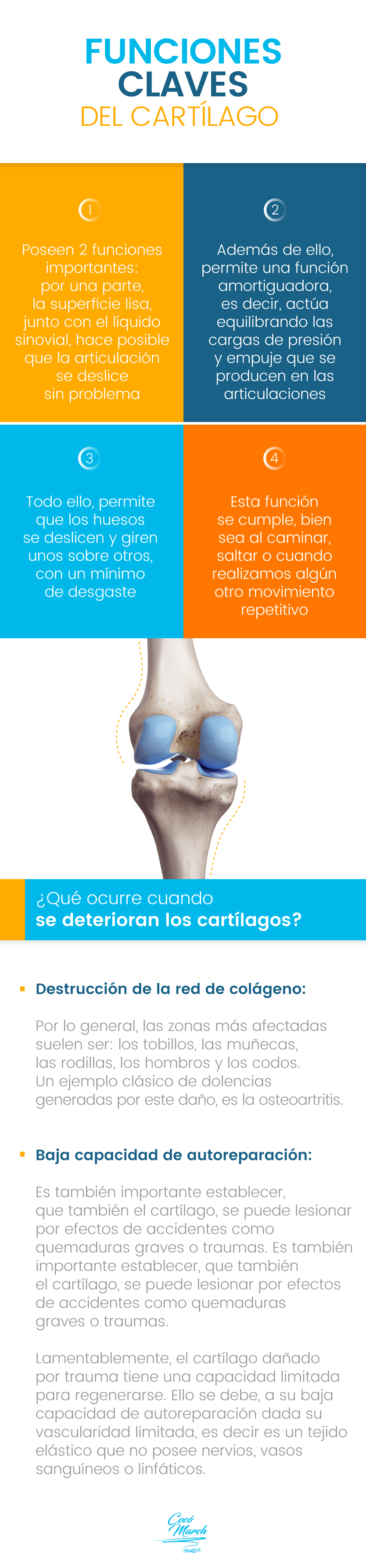 funciones-de-los-cartilagos