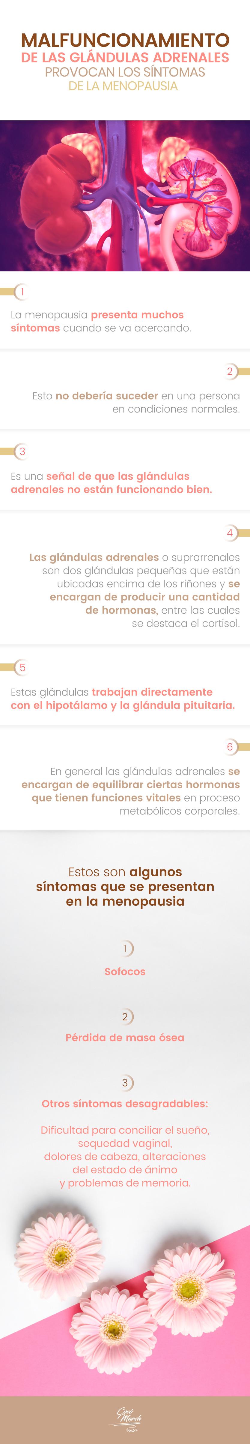 glandulas-adrenales-y-menopausia