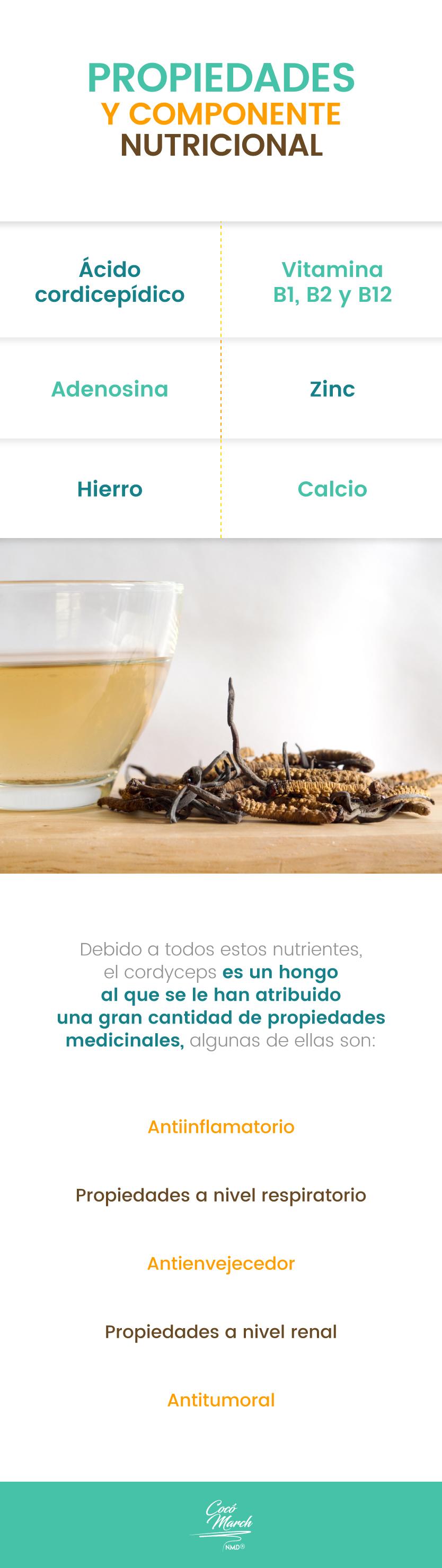 Cordyceps-sinensis-propiedades-nutricionales