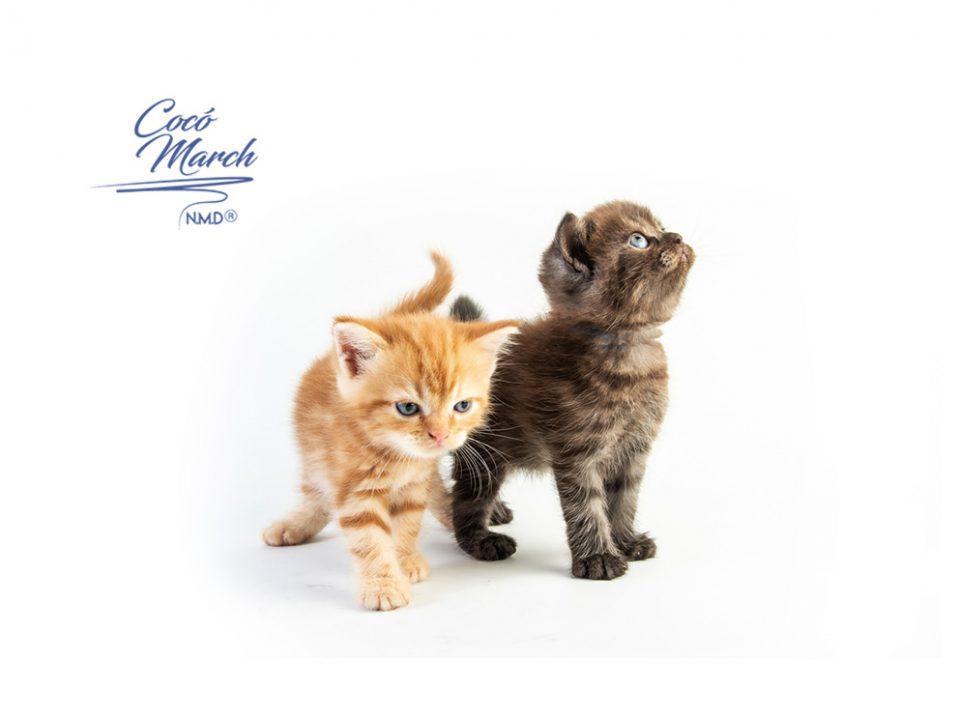 los-gatos-podrian-ser-transmisores-asintomaticos-del-covid-19