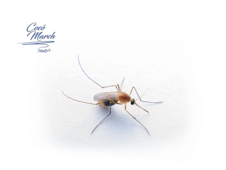 estudio-covid-19-no-se-transmite-por-mosquitos