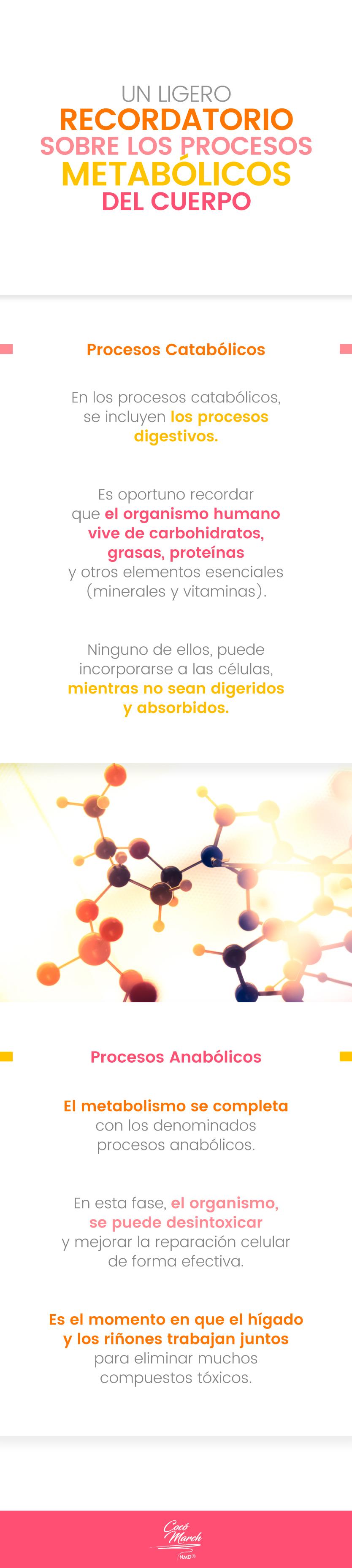 procesos-metabolicos-del-cuerpo