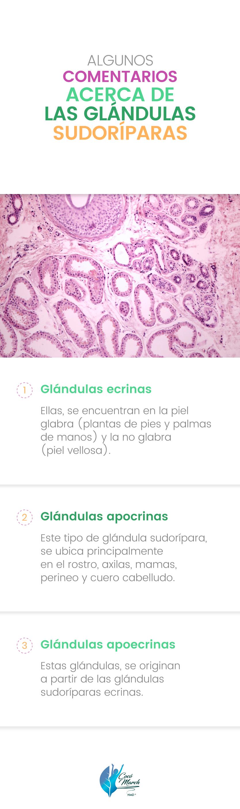 glandulas-sudoriparas