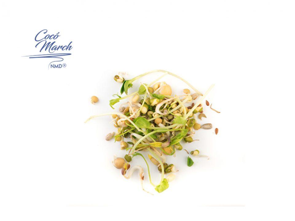 semillas-germinadas-para-una-buena-nutricion