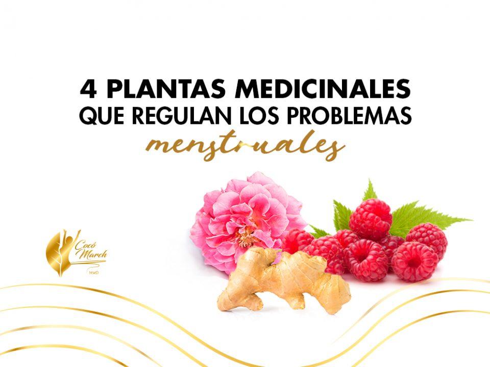 plantas-medicinales-regulan-problemas-menstruales