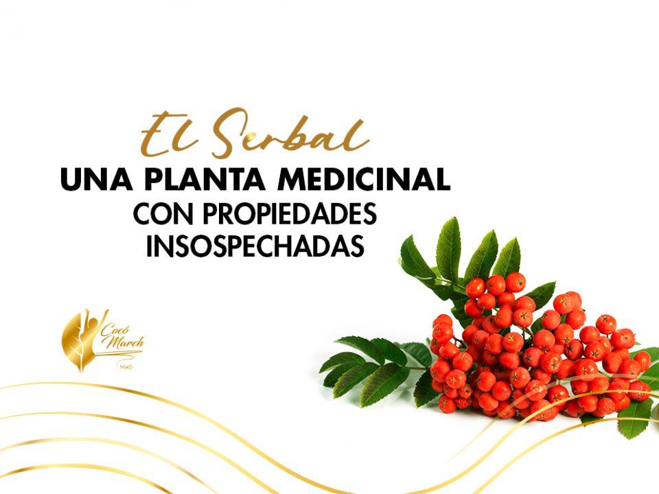 serbal-planta-medicinal-con-propiedades-insospechadas