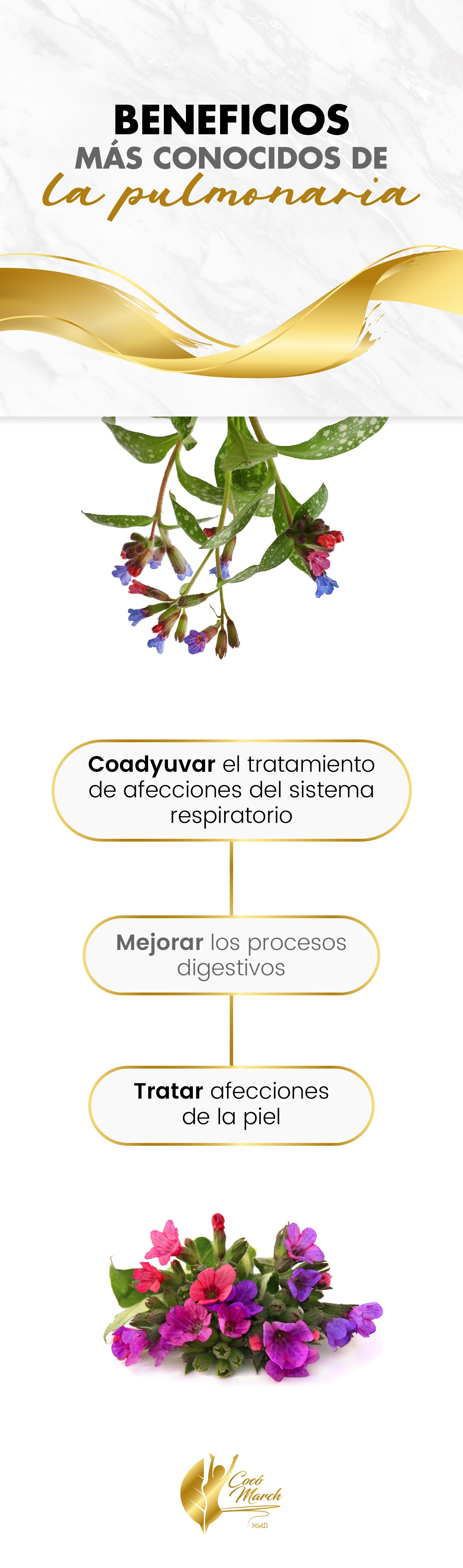 beneficios-de-la-pulmonaria