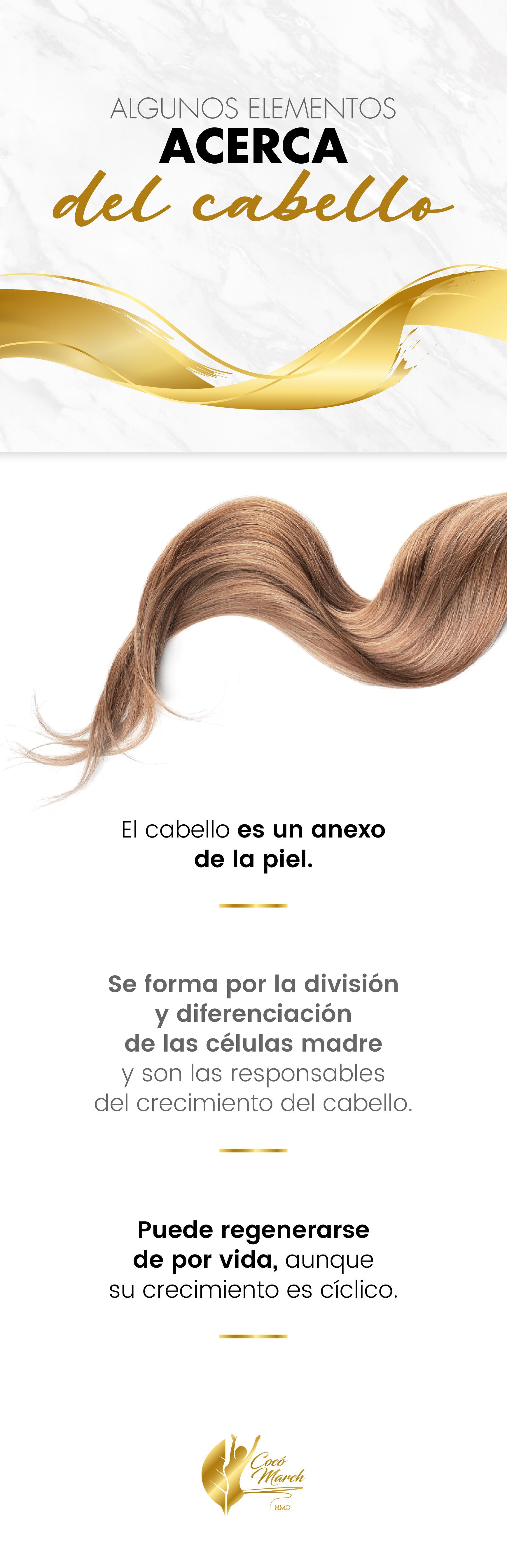 informacion-sobre-el-cabello
