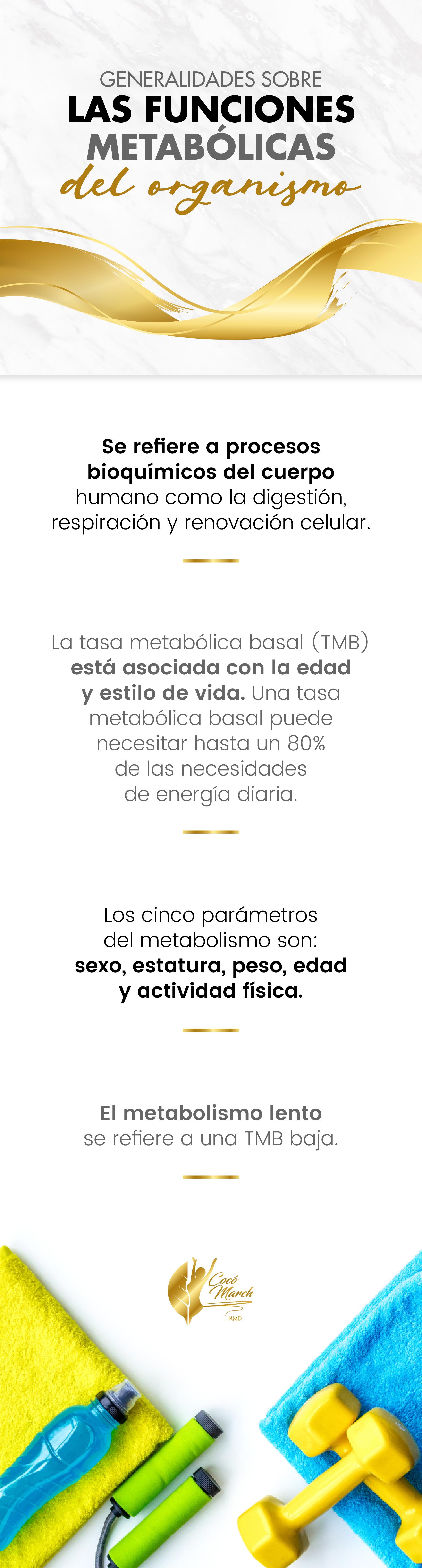 funciones-metabolicas-del-organismo