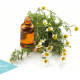 5 Remedios Naturales Para La Otitis o Infección De Oídos